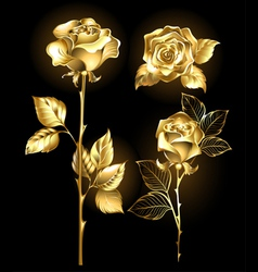 Set of Golden Roses vector