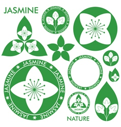 Jasmine vector image