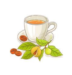 Nutmeg tea vector