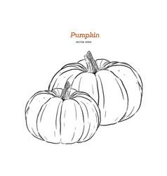 Ector hand drawn set of pumpkin vector