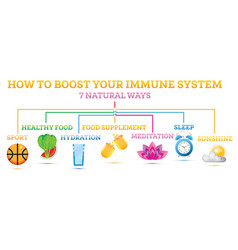how to boost your immune system infographic vector image