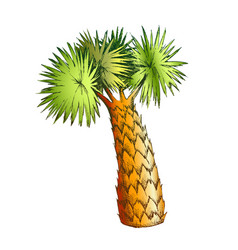 palm leaves tree high trunk color vector image