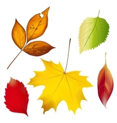 set colorful autumn leaves vector image