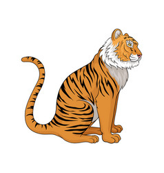 sitting tiger side view vector image