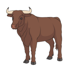 color with a bull a cow vector image