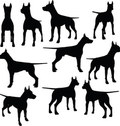 dog collection silhouette vector image