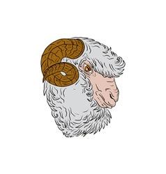 Merino Ram Sheep Head Drawing vector image vector image