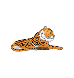 adult tiger laying isolated vector image