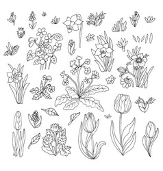 Flowers collection set design for greeting card vector