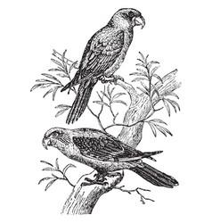 Gray parrots vintage vector