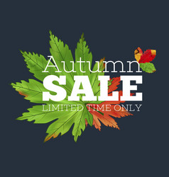 sale banner with colorful seasonal fall leaves vector image