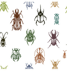 sketch a bugs ornament vector image