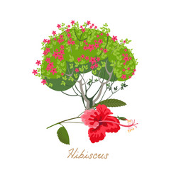 Tropical flowers and plants hibiscus vector