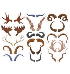 wild animals horns antlers reindeer bull goat vector image
