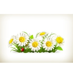 Daisies in grass vector