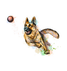 German shepherd dog playing and catching a ball vector