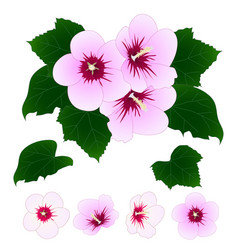 Hibiscus syriacus - rose of sharon vector