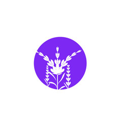 lavender flower icon vector image