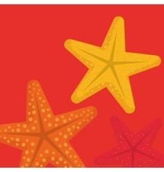 sea star beach vector image