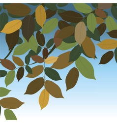 Walnut Tree leaves vector