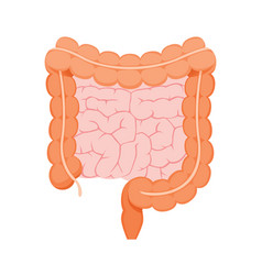 Large and small human intestine vector