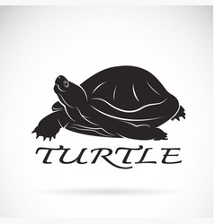 A turtle on white background reptile animal vector