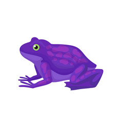 Bright purple frog with spots on back amphibian vector