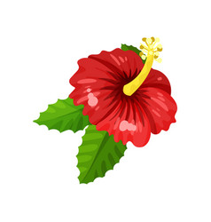 flat icon of hibiscus with bright red vector image