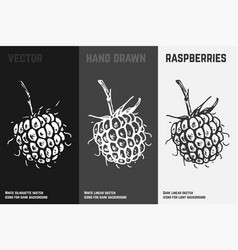 hand drawn blackberry or raspberry icons vector image