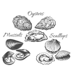 oysters and scallops sketch vector image