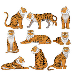 Set of tiger in different poses large wild vector