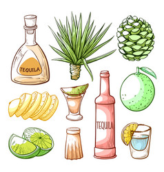 tequila pub mexican drink hand drawn set vector image