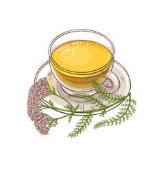 yarrow tea vector image