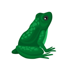 big green frog sitting isolated on white vector image
