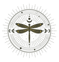 magical witchcraft dragonfly insect mystical spell vector image