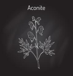 Aconite aconitum napellus flowering plant vector