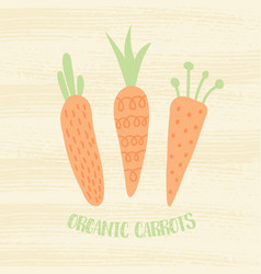 organic carrots vector image vector image