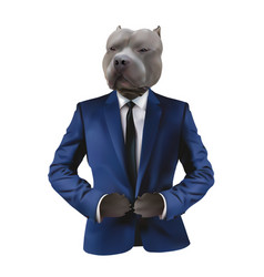 Pitbull in man suit on white background vector