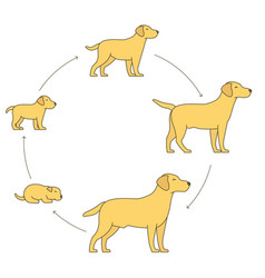 Round stages dog growth set from puppy to vector