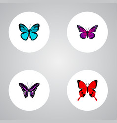 Set of butterfly realistic symbols with striped vector