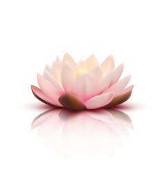 3d flower lotus vector