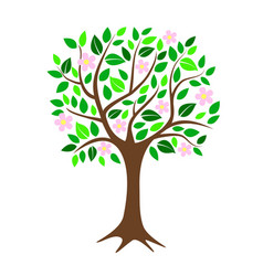 blossoming cherry or apple tree with flowers and vector image