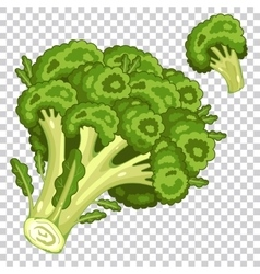 Broccoli isolated organic food farm food vector image