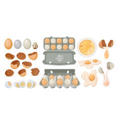 Eggs in carton box tray and broken farm product vector