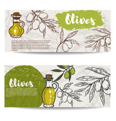 set of olive oil flyers olive branch vector image