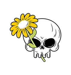 Skull and Chamomile White flower and death head of vector image vector image