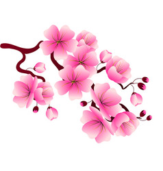 Cherry blossom branch with pink flowers for vector
