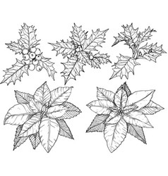 christmas flowers set sketch black and white vector image