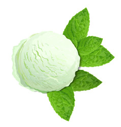mint green ice cream with mint leaves isolated on vector image