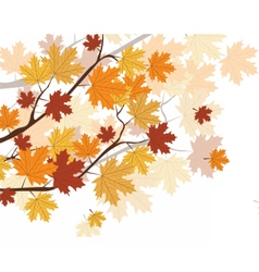 Orange autumn maple leaves vector